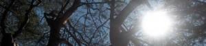 cropped-cropped-kevat-kesa-2009-ufosyote-071.jpg